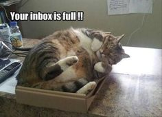 24 Funny Animal Pics for Your Tuesday | Love Cute Animals