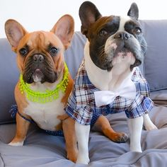 .dressed up Frenchies are a major weakness of mine :)