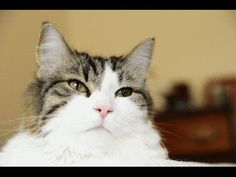 Meet Oscar, a cat with a supernatural ability to feel when people are about to die. In over 50 documented cases, Oscar, who lives in a nursing home , has cur...