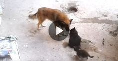 This video is a true delight to watch! It appears that this mother cat is old friends with the dog, and just like us humans when something amazing happens in our lives we like to share