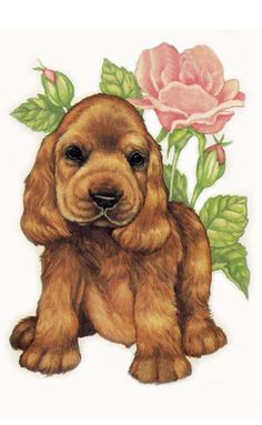 Cocker Spaniel by Robin James (So cute! I had I had Cocker Spaniels that had a litter and all the littler cuties looked just like this one!)