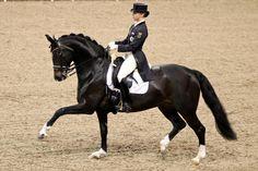 Oldenburger Pferdezuchtverband e.V. | Aktuell | News