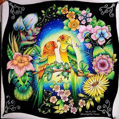 ⛦2016. 8. 11. . . 매지컬정글 ; Magical Jungle [ No.8 ] 한쌍의 앵무새 커플 완성.✌ 컬러링 도구는 태그를 참고하세요.😁 ➡ The finished painting☺ ➡ Colored pencil, see the tag. ➡ Background ; Prisma Color Pencil & Posca . . ❤ Couple a pair of parrots ❤ . . #마법의정글 #매지컬정글 #MagicalJungle  #컬러링북 #ColoringBook #조해너배스포드 #JohannaBasford  #ColoringArt #coluring #adultcoloringbook #mycreativeescape #jardimsecreto #파버카스텔폴리크로모스 #스테들러카라트아쿠아렐 #Fabercastell  #Polychromos #ColorPencil #STAEDTLER #KaratAquarell #ColorPencil #프리즈마유성 #Prisma…