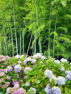 bamboo and hydrangea