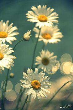 ✯ Mothers Garden