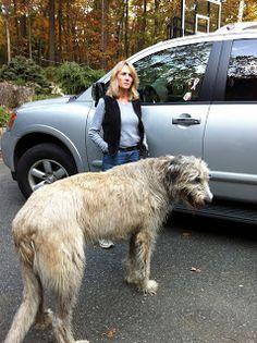 my friends over 200 pound Irish Wolfhound