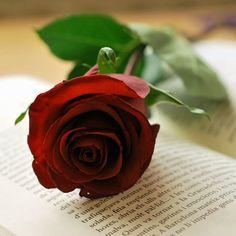 Você faz a Diferença: Seja flor, floresça sempre...