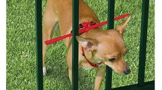 Keep your dog in the fence!