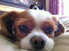 Ha! Puppy PHOTO BOMB. More #cutepic photos: http://www.peoplepets.com/people/pets/gallery/0,,20579408,00.html#21134617)