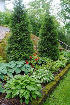 Landscape Plans, Landscape Design, Sloped Landscape, Hedge Fence Ideas, Landscaping A Slope, Small Garden Design, Ornamental Grasses, Dream Garden, Beautiful Gardens