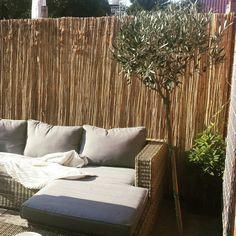 Lounge bank olijfboom rieten schutting relax tuin leven