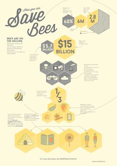 Infographic to help gain awareness on the decline of bee's and the effect it has on us