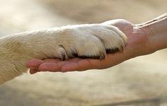 Köpekleri Tanıyalım - Toplum & Sosyal İlişkiler - KizlarSoruyor.com