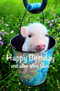 Send the best and funniest pictures for your birthday ›Whatsapp pictures - Geburtstag Happy Birthday Meme, Birthday Greetings, It's Your Birthday, Teacup Piglets, Cute Piglets, Baby Pigs, Pet Pigs, Whatsapp Pictures, National Pig Day