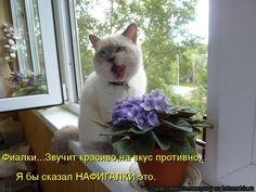 Невероятно милые котоматрицы / Питомцы