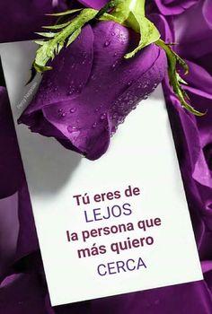 Imagenes de rosas con frases para un amor que esta lejos