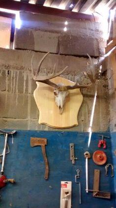 Cabeza de cabra cuernos de venado