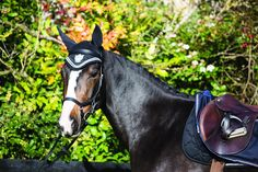 Just In:  Horseware Rambo D.... Check it out here! http://www.corkfarmequestrian.co.uk/products/horseware-rambo-diamante-ear-net-fly-veil-hood-fringe-black-pony-cob-sale?utm_campaign=social_autopilot&utm_source=pin&utm_medium=pin