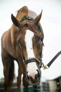Kentucky Derby/ Preakness Winner CALIFORNIA CHROME