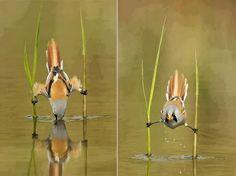 Funny bird :)