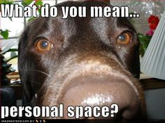 Funny pictures and memes of dogs doing and implying things. If you thought you couldn't possible love dogs anymore, this might prove you wrong. Animal Memes, Funny Animals, Cute Animals, Animal Pics, Funniest Animals, Animal Funnies, Pretty Animals, Animals Dog, Wild Animals