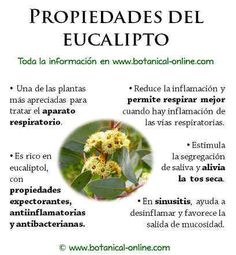 Eucalipto Health Diet, Health And Wellness, Health Fitness, Natural Medicine, Herbal Medicine, Healthy Nutrition, Healthy Drinks, Healing Herbs, Water Recipes