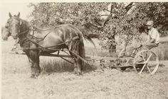 farm horse plow From the vintage collection of Bill Vrantzidis