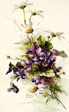 Catherine Klein, Etiquette Vintage, Sweet Violets, Deer Art, Botanical Drawings, China Painting, Floral Illustrations, Flower Images, Vintage Cards