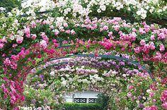 l'hay les roses...  france, i think