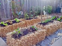 Introduction to Straw Bale Gardening: Straw Bale Gardening is a simply a different type of container gardening. The main difference is that the container is actually the straw bale itself, Hay Bale Gardening, Strawbale Gardening, Container Gardening, Gardening Tips, Urban Gardening, Veg Garden, Lawn And Garden, Garden Beds, Garden Art