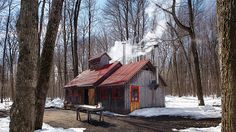 Le temps des sucres | Les idées de ma maison TVA Publications | © Photos: Yves… Farm Cottage, Cottage Homes, Cabins In The Woods, House In The Woods, Sugar Bush, Barns Sheds, Mountain Style, Refuge, Shed Homes