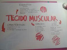 Mapa mental tecido muscular. Biologia