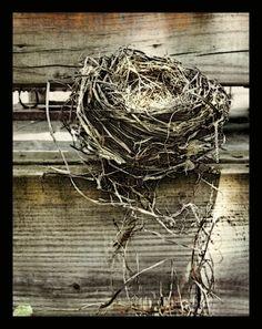iPhoneography, 6-20-12 Empty Nest