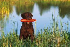 Hunting dog :)
