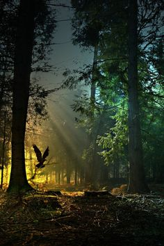 paysage paradisiaque de la nature dans la foret