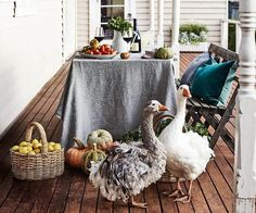 Chef Annie Smithers' farm garden in Central Victoria - Inquisitive free-ranging Sebastopol geese, with their distinctive ruffled feathers, check out the autumn harvest on the verandah at Babbington Park Farm Gardens, Outdoor Gardens, Sebastopol Geese, Porches, Country Lifestyle, Outdoor Living, Outdoor Decor, Farm Life, Wabi Sabi