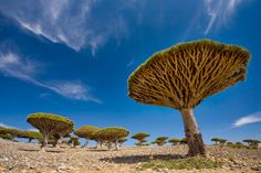 http://esromart.hubpages.com/hub/Socotra-Island-the-Most-Exotic-Nature-and-Wildlife-in-the-Earth