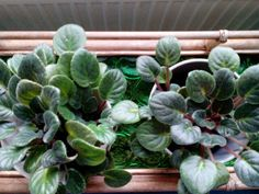 Vihreää voimaa kukista ja kasvien kasvattamisesta