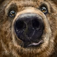 Trademark Fine Art 'Kodiak Closeup' Canvas Art by Patrick LaMontagne, Black Bear Pictures, Animal Pictures, Ours Grizzly, Funny Animals, Cute Animals, Fantasy Character, Les Fables, Bear Illustration, Art Sculpture