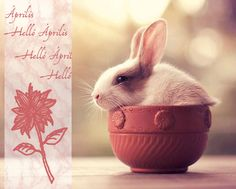It is Easter time, it is bunny time. To celebrate this year's Easter, we handpicked some extreme adorable bunny photos from internet. These little fluffy cuties Animals And Pets, Baby Animals, Funny Animals, Cute Animals, Cute Bunny Pictures, Animal Pictures, Bunny Pics, Hamsters, Wildlife Photography