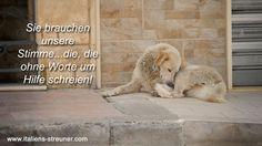 Petition · Hilfe für Italiens Streuner (Perspektierisch e.V.): Wir appellieren an die italienische Regierung umgehend gegen die Missstände in den grausamen Canilen Italiens vorzugehen! Die Bereicherung für Canilebetreiber auf Kosten der Hunde muss ein Ende haben! · Change.org