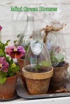 Make mini greenhouse s with a terracotta pot and half a 2 litre soda bottle.