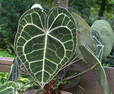 Plantas para rincones húmedos y oscuros