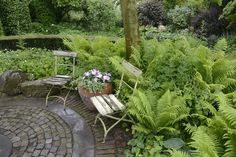 Ferns and paving in seating area, possibly delineate path intersections with change of paving materials.