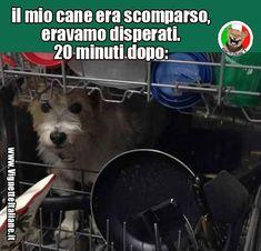Clicca sull'immagine per visitare il sito. #Animali, #Cani  #Divertenti, #Funny, #Funnypics, #Humor, #Humour, #Immagini, #Immaginidivertenti, #Italiane, #Lol, #Meme, #Memeita, #Memeitaliani, #Memes, #Memesita, #Memesitaliani, #Pics, #Umorismo, #Vignette, #VignetteitalianeIt