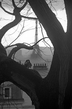 Sans titre by Maud Sophie - Love birds in a tree, Paris. Photo more as art than a photo of an area. Beautiful framing w/birds in heart shaped from branches