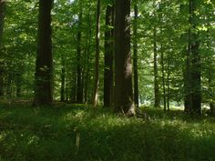 Forests in and around Goettingen