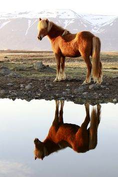 Mirrored Horse by jonrrr, via Flickr