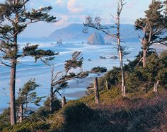 Are you planning an Oregon coast camping trip?It's hard to beat the beauty of the scenery you'll have an opportunity to see when you take an Oregon coast camping trip. Oregon Coast Camping, Oregon Travel, Oregon Usa, Oregon Snow, Portland Oregon, Beach Activities, Columbia River Gorge, Cannon Beach, Pacific Northwest