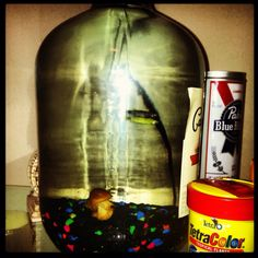 Wine jug fish tank :)